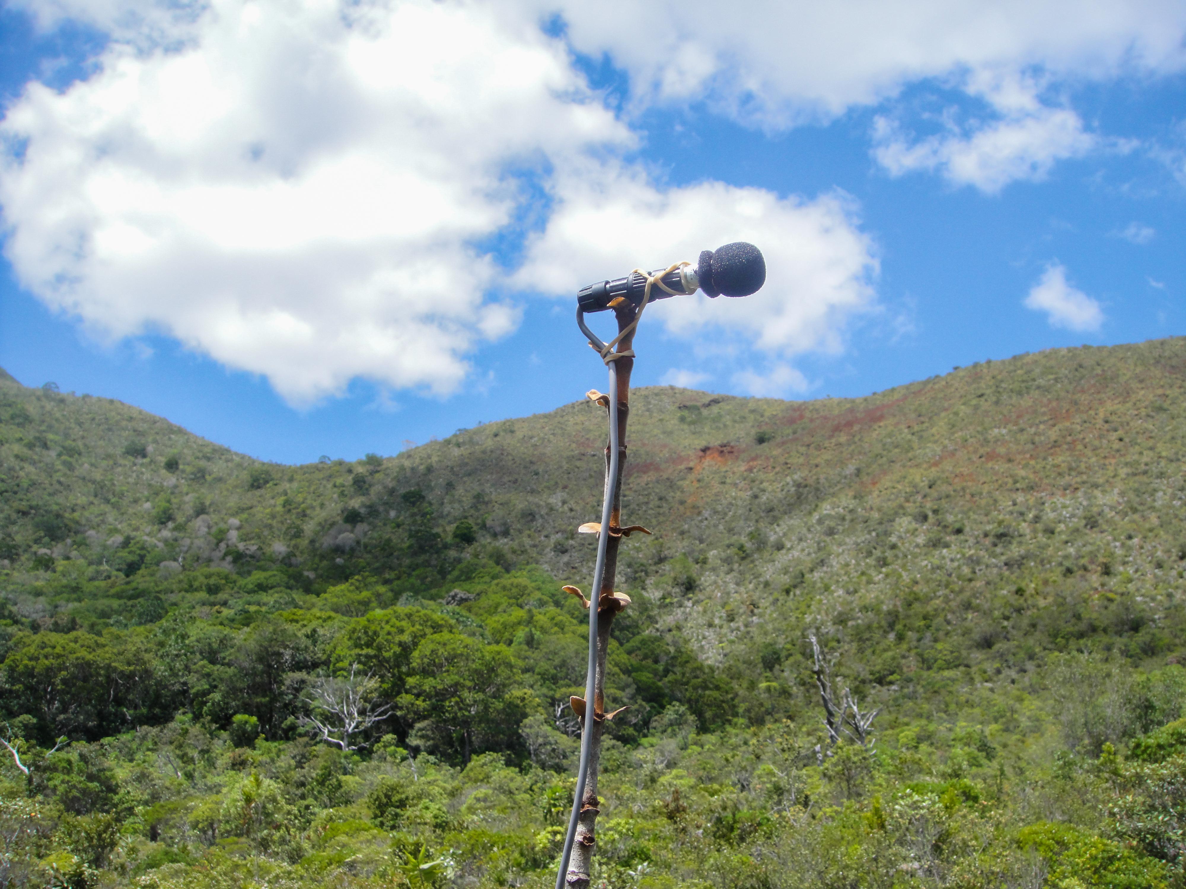 Écoacoustique, le thermomètre des écosystèmes   | IRD le Mag'