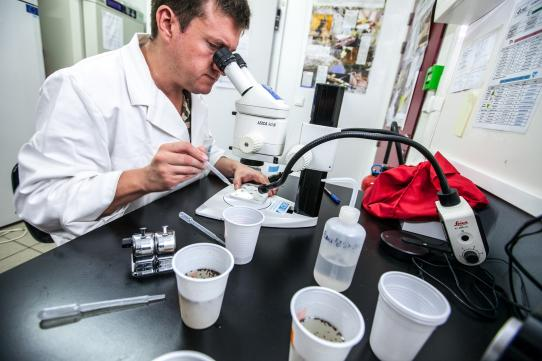 loupe binoculaire entomologiste moustiques gobelets